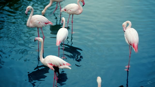 Flamingos Flock In The Lake video
