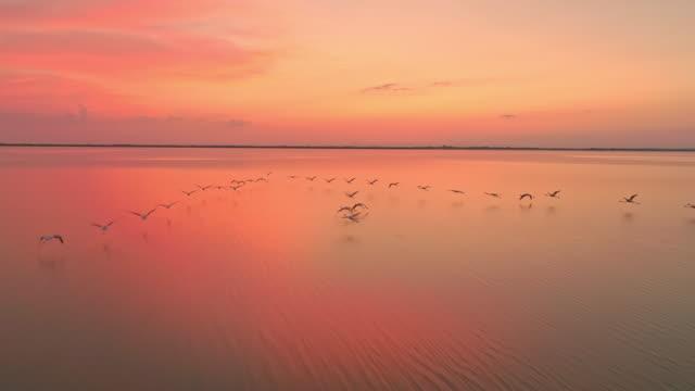 aerial slo mo flamingos flying in lagoon at dusk - uccello acquatico video stock e b–roll
