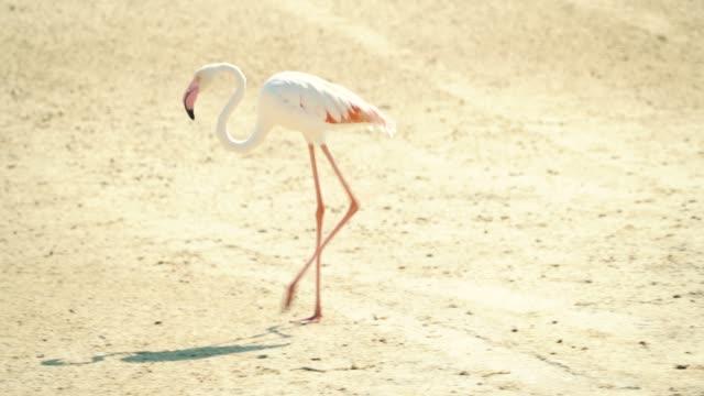 Flamingos in Dubai Creek
