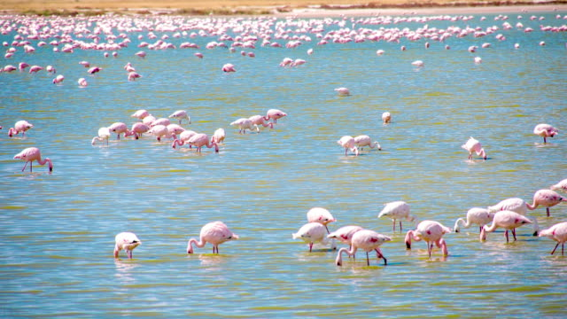 WS Flamingos In The Lake video
