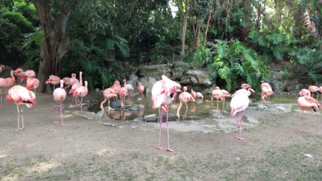 Flamingo's die in een dierentuin rusten video