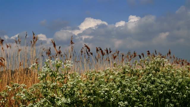 Flanders, Belgium, countryside springtime scenery : blooming flowers along a rural path video