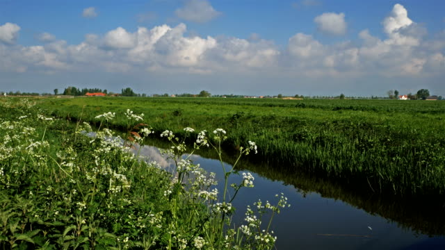 Flanders, Belgium, countryside springtime scenery :  blooming flowers along a water canal video