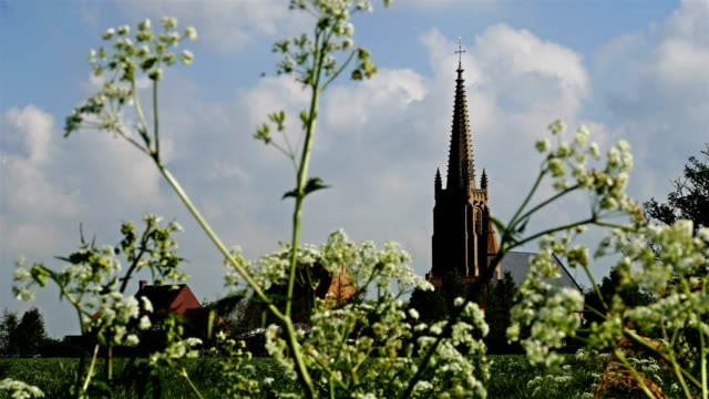 Flanders, Belgium, countryside springtime scenery :  blooming flowers with typical village in background video