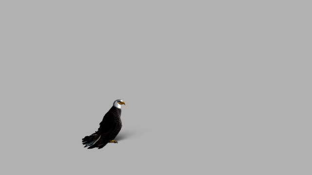 Fleeing Eagle with Alpha Channel (Loopable) Design Element eagle bird stock videos & royalty-free footage
