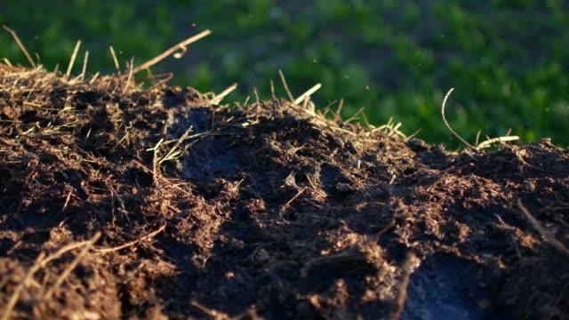 Flies sit on a heap of dung. Rural video video