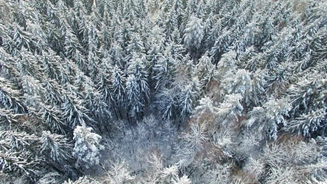 4K. Flight above light winter forest at snowfall on the north, aerial panoramic view 4K. Flight above light winter forest at snowfall on the north, aerial panoramic view. siberia stock videos & royalty-free footage