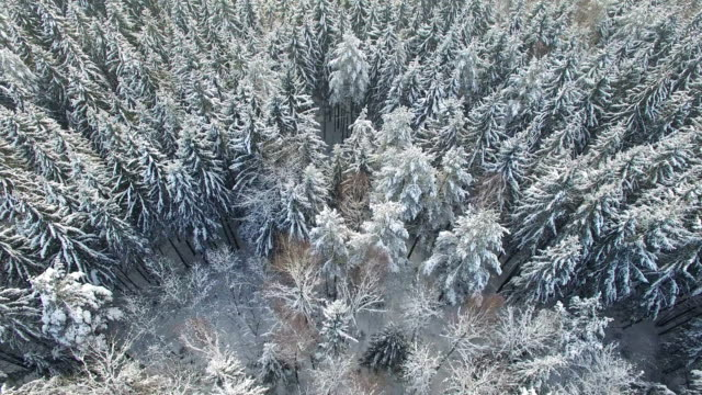 4K. Flight above snowy winter forest on the north, aerial view. video