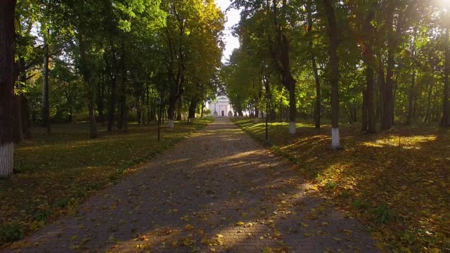 Flight above the autumn alley Alley in the autumn park in the morning, fly through the autumn park, Kachanovka palace and park ensemble in forest trees, alley stock videos & royalty-free footage