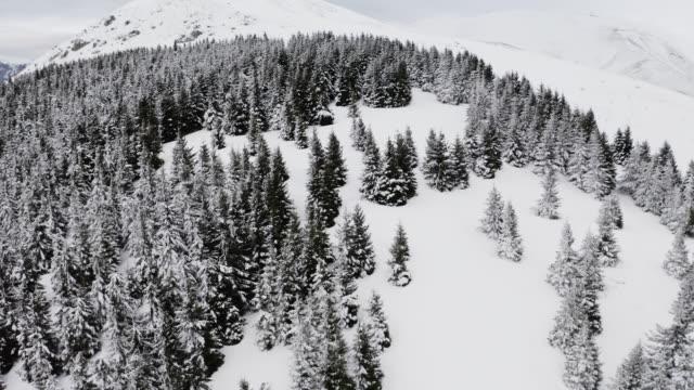 vídeos de stock e filmes b-roll de 4k. flight above winter forest on the north, aerial top view stock video - sibéria
