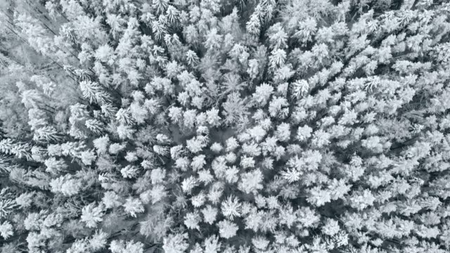 4K. Flight above winter forest on the north, aerial top view 4K. Flight above winter forest on the north, aerial top view siberia stock videos & royalty-free footage