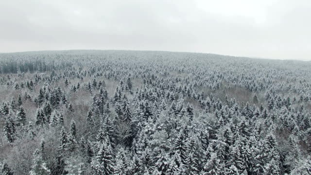 4k. 北の冬の森の上の飛行, 航空写真. - シベリア点の映像素材/bロール