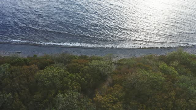 Flight along coastline of stone beach by sea and tree forest on drone, aerial view video