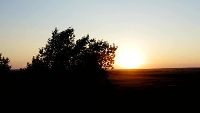 arka planda gün batımı ile büyük bir alanda ağaçların bir çift tarafından uçuş - sale stok videoları ve detay görüntü çekimi