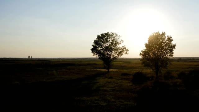 arka planda bir gün batımı ile geniş bir alanda iki ağaç tarafından uçuş - sale stok videoları ve detay görüntü çekimi