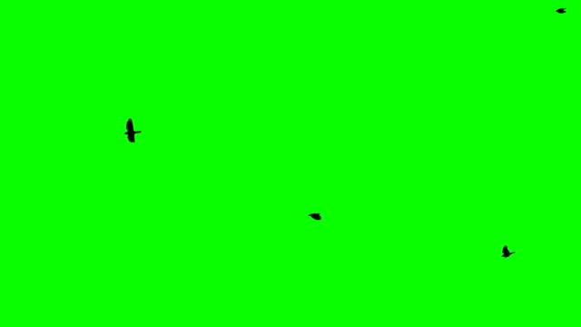 vídeos y material grabado en eventos de stock de flight of a black raven crow on a green background chromakey footge seamless loop black birds flying from right to left big birds - pájaro