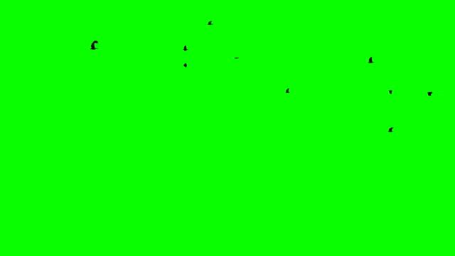 vídeos de stock, filmes e b-roll de vôo de um corvo preto do corvo em um fundo verde acima e fluxo direito do footge de chromakey da multidão desobstruído dentro e fora dos pássaros pretos que aparecem - pássaro