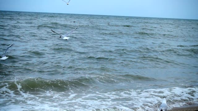 Flight of a seagull. Slow motion.
