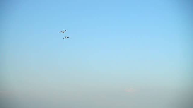 Flight of geese in the sky. Slow motion.