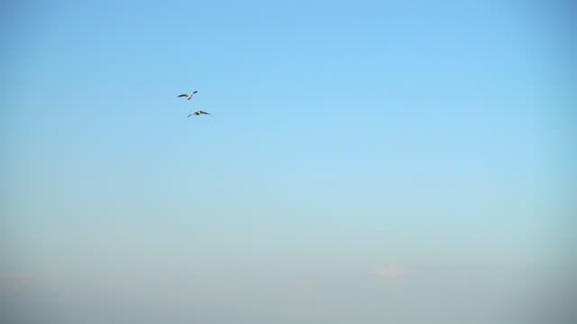 空にガチョウの飛行。スローモーション。 - 2匹点の映像素材/bロール