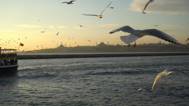 vídeos de stock e filmes b-roll de flight off the seagulls with istanbul landscape - istambul