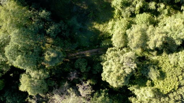 kalın bir ormanın ortasında kırsal bir yol üzerinde uçuş - sale stok videoları ve detay görüntü çekimi