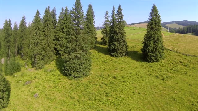 Flight over beautiful trees and  village in mountains. Aerial video