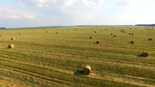 flyg över grödan vete eller råg fältet med stook hö halm balar. skörda jordbruk farm landsbygdens antenn fullhd video bakgrunden. bröd produktionskonceptet - 4 kilometer bildbanksvideor och videomaterial från bakom kulisserna