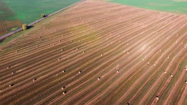 flyg över grödan vete eller råg fältet med stook hö halm balar. skörda jordbruk farm landsbygdens antenn fullhd video bakgrunden. bröd produktionskonceptet - tävlingsdistans bildbanksvideor och videomaterial från bakom kulisserna