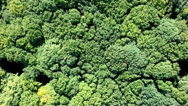 vídeos de stock, filmes e b-roll de voo sobre a floresta - organic shapes