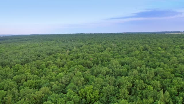 Bидео Flight over natural landscape of the forest.