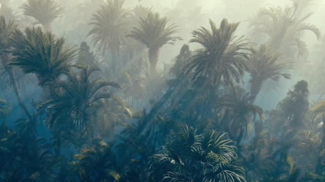 vídeos de stock e filmes b-roll de flight over palm forest covered with fog - oleo palma