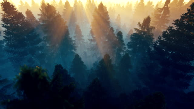 Flight over pine forest against beautiful sunrise, 4k