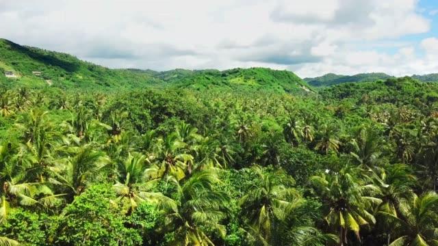 熱帯雨林以上フライト - インドネシア点の映像素材/bロール