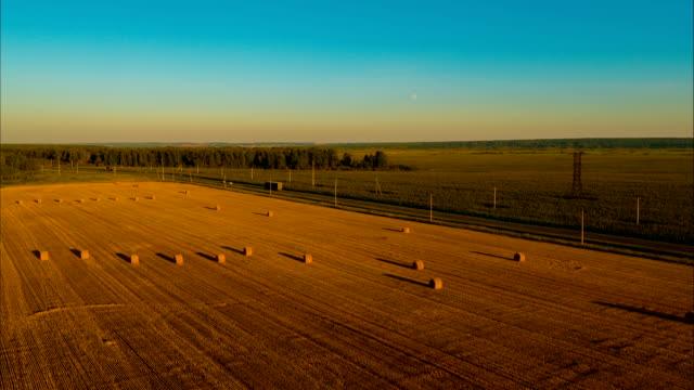 vidéos et rushes de vol au-dessus du champ après la récolte pour l'hiver pour les bovins - foin