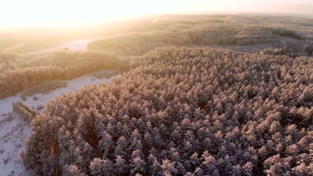 Flight over the forest in winter aerial shot video