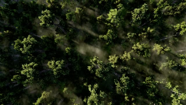 Flight over the misty forest. video