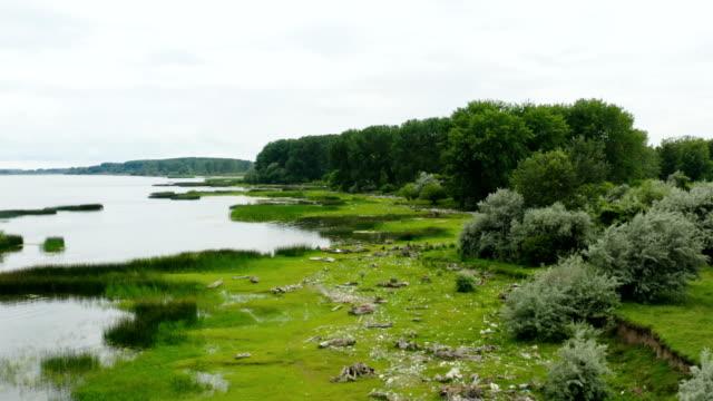 bataklık sahilinin nehir üzerinde uçuşu - sale stok videoları ve detay görüntü çekimi