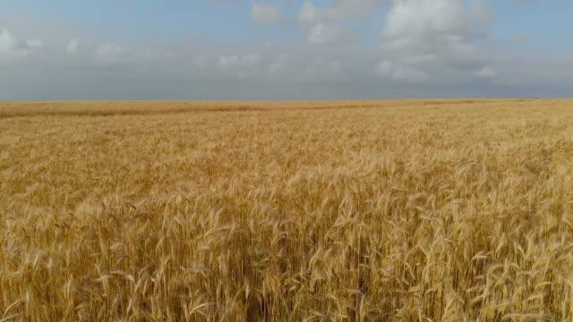 麦畑以上のフライト - 大麦点の映像素材/bロール