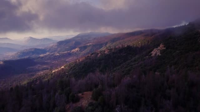 flight over tree covered mountainside in california sierra nevada - parco nazionale video stock e b–roll