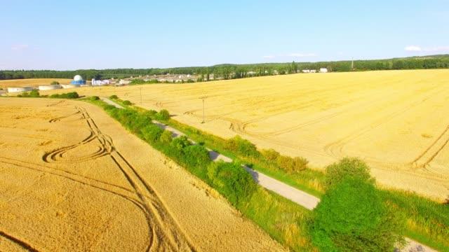 flug über weizenfeld. luftaufnahme feld vor der ernte. - aerial view soil germany stock-videos und b-roll-filmmaterial
