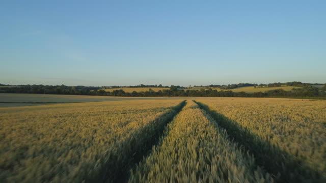 flight over wheat fields at sunset - canola video stock e b–roll