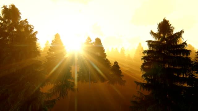 Flight through pine forest at sunrise, 4k