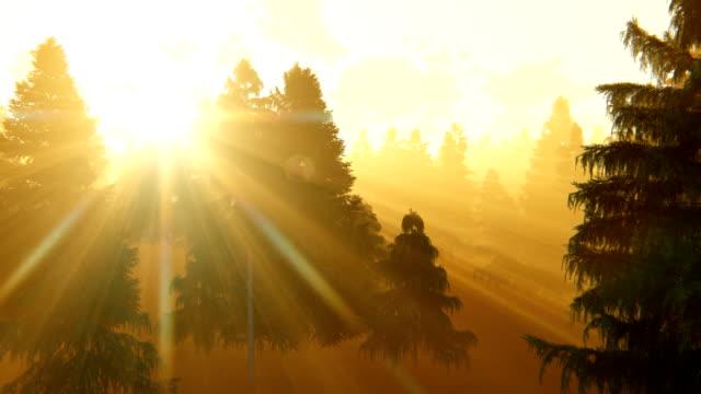 Flight through pine forest at sunrise