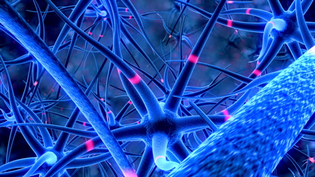 Flight through the nerve cells