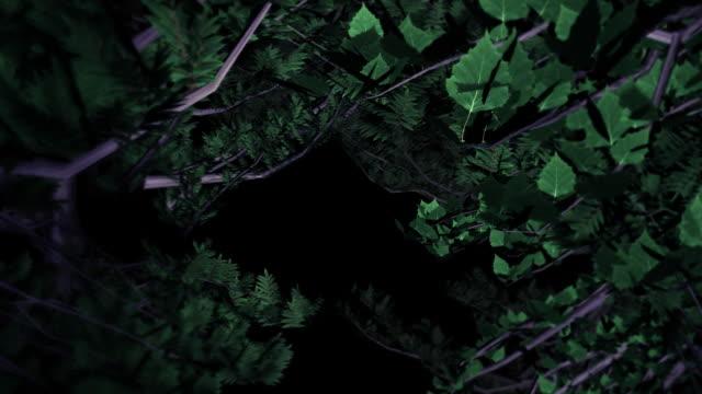 flight through trees loop video