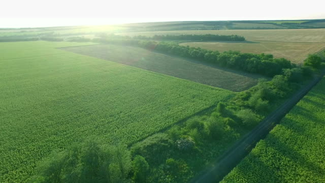 Flight to Quadrocopters Over Fields at Sunset video