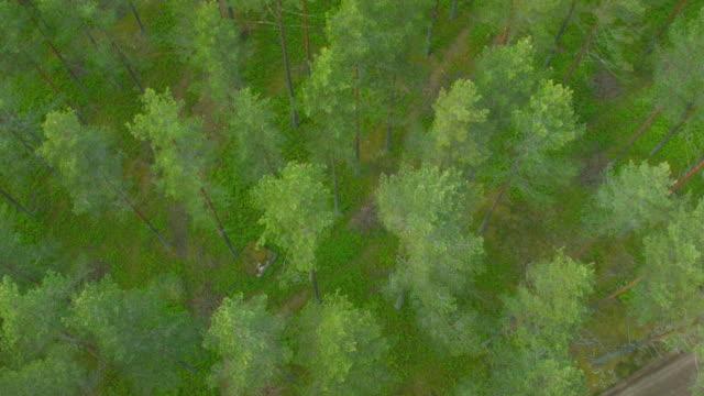 flyg tråg skog - pine forest sweden bildbanksvideor och videomaterial från bakom kulisserna