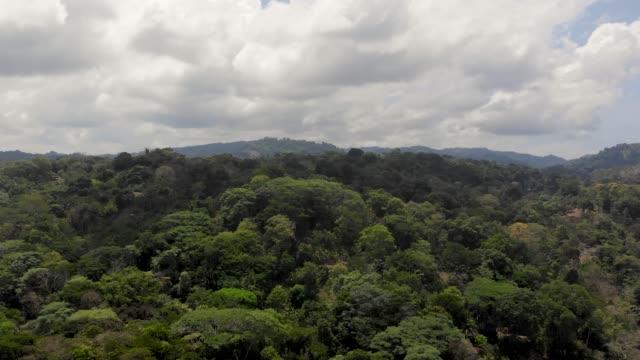 Flight Birds flying over the rainforest in Costa Rica hawk bird stock videos & royalty-free footage
