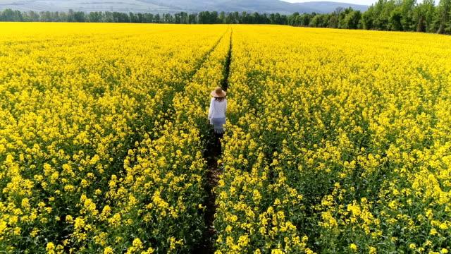 かなり、若い女性が置かれている、黄色の開花菜の花畑に無人機と飛行 ビデオ